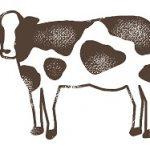 夢占いで牛は健康・余裕を表す!牛乳や牛丼など5例